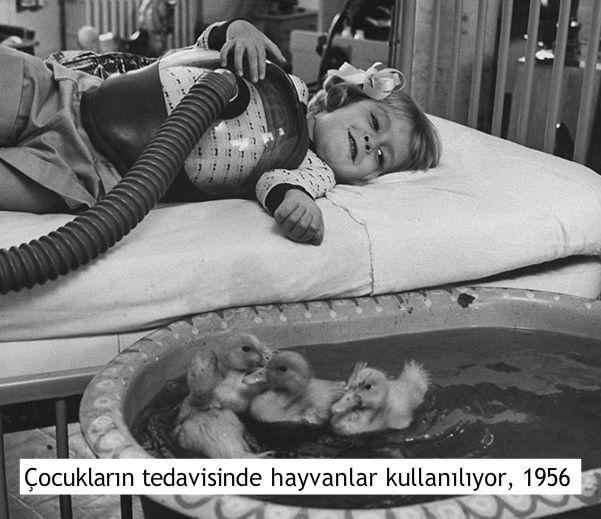 etkileyici fotoğraflar çocukların tedavisinde hayvanlar